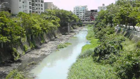990712竹溪 清植物4
